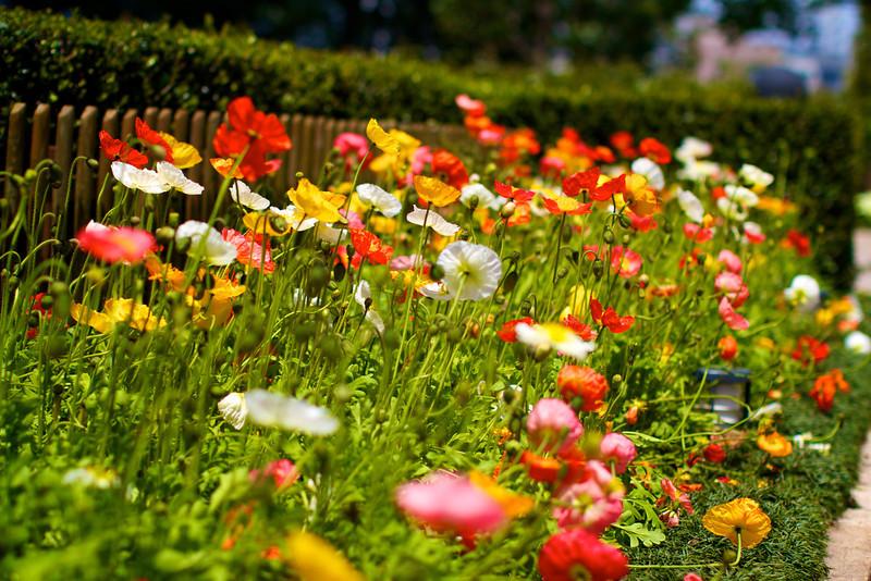 Hie Jinja<br /> IMG_5828 - 2012-04-29 at 11-39-30