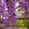 Hie Jinja<br /> IMG_5851 - 2012-04-29 at 16-20-04