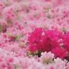Hie Jinja<br /> IMG_5884 - 2012-04-29 at 16-59-07
