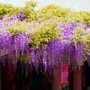Hie Jinja<br /> IMG_5855 - 2012-04-29 at 16-22-21