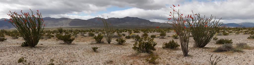 Octotello field near Anza Borrego  Not really the best photography conditions but it was fun.
