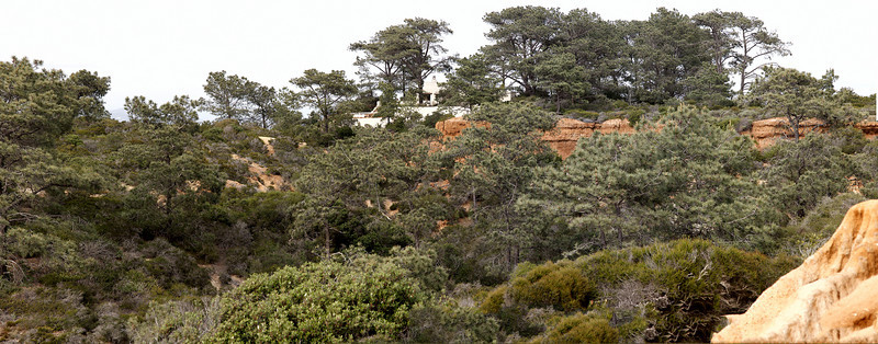Torrey Pines, State Reserve.  I have not been here in 40 years.
