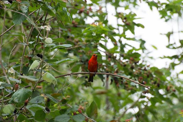 High Island, TX Audubon Sanctuary
