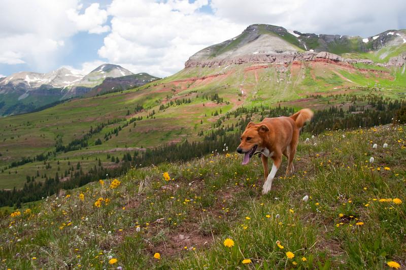 Colorado Trail near Molas Pass - July 2009