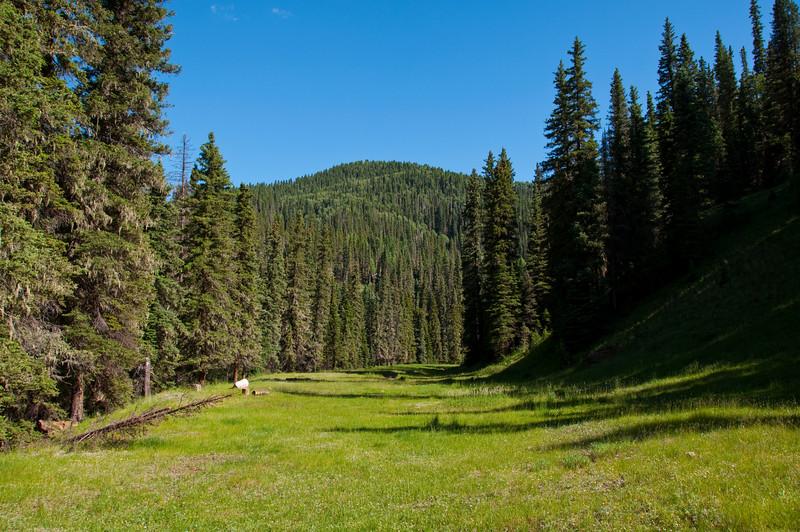 Hermosa Creek Trail - Durango, Colorado July 2009