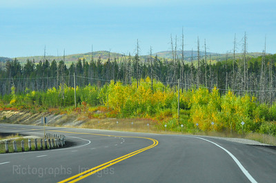 Trees On The Highway