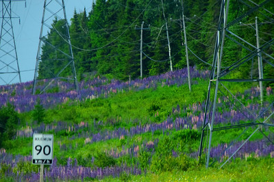 Lupins & The Highway, Spring 2019