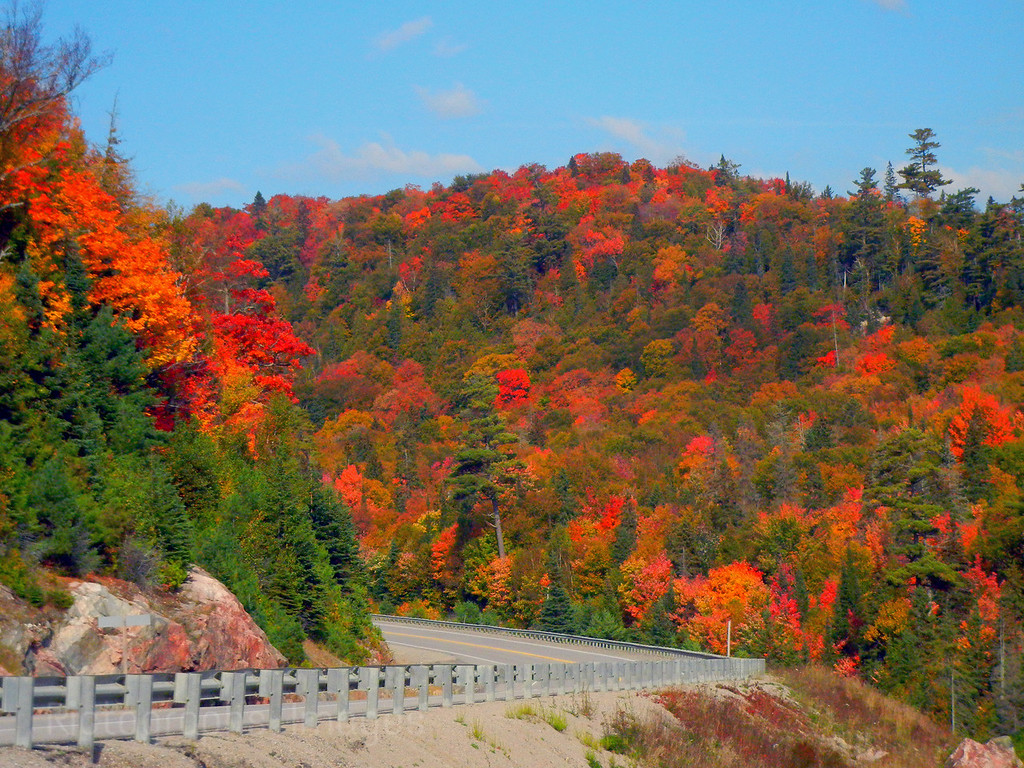 Autumn Trees Highway Seventeen
