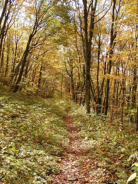 Mud Gap Trail