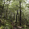 The woods atop Stratton Bald and Stratton Ridge are primarily birch(rough, peeling bark), beech (smooth bark), with oak and other species thrown in.