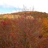 Hawthorne shrub