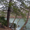 Trees along the Caney Fork