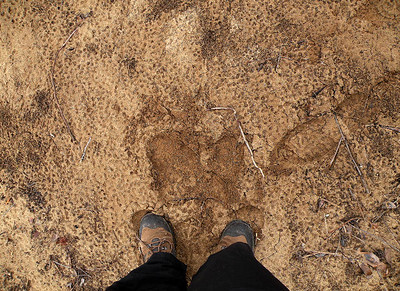 Standing on a sandbar beside the Caney Fork. Some SERIOUS seasonal flooding washes up these sand bars and stepping on them is dicey.  The ground felt like sponge to walk on and I worried I was going to fall through a hole.