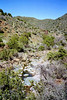 Cave Creek Trail.