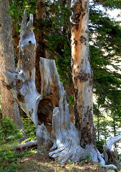 Dead Tree near Devils Thumb Lake