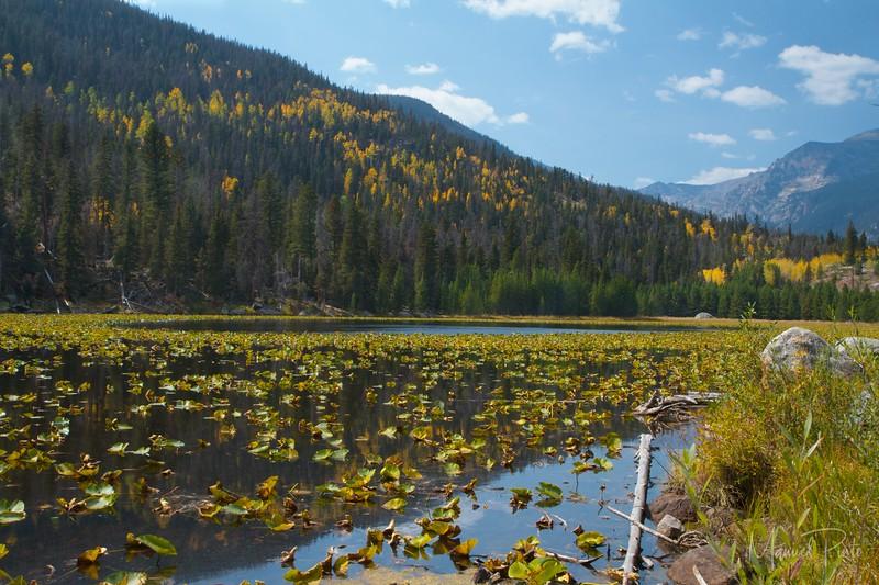 Cub Lake, Fall colors, late September