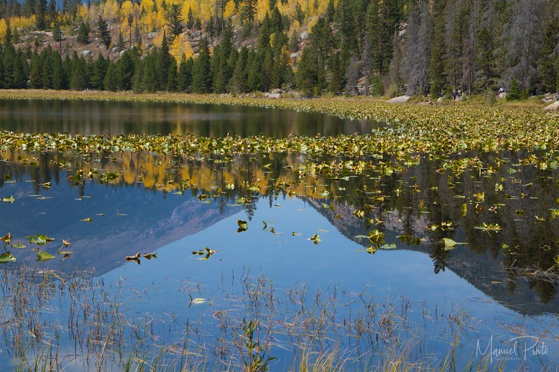 Cub Lake, Fall colors, late September