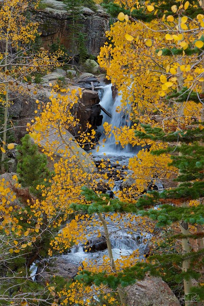 Alberta Falls through the changing Aspens - late September