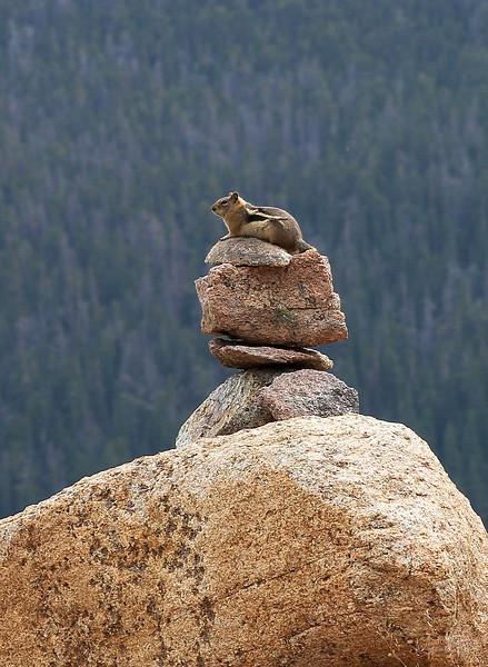 Chipmunk meditating