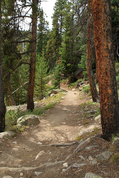 Forest Trails