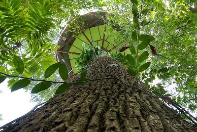 Manzanillo Tree House Observatory