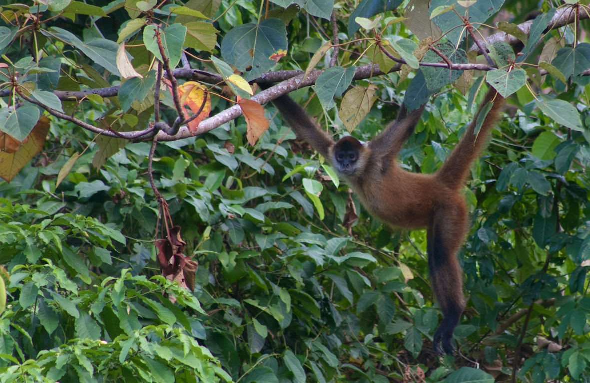 Monkey See - Monkey Do