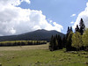 A view of the San Francisco Peaks (the summit of Mt Humphreys is higher, but can't be seen behind these closer peaks).  You can kind of see the trail in this picture as it crosses the meadow (actually the base of a ski run).