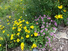 Pictures don't do justice to the beautiful wildflowers on the trail...but I tried anyway! ;-)
