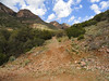 This is the uphill portion of the old mining road that our hike will start on.