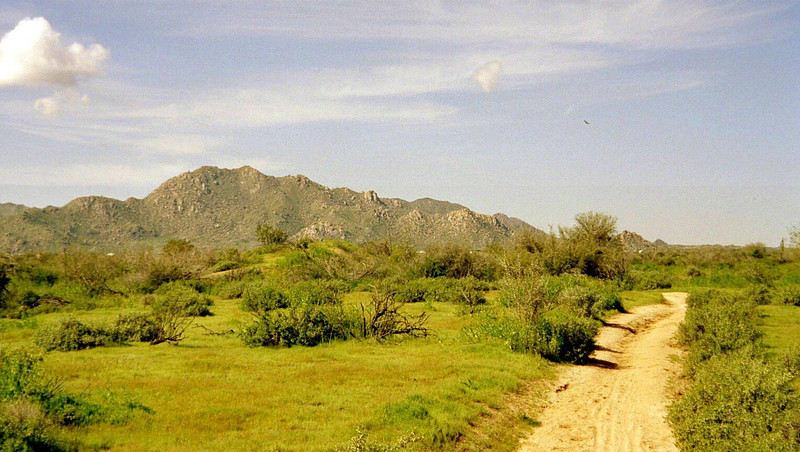 A view of the McDowell Mountains from the Scenic Trail.