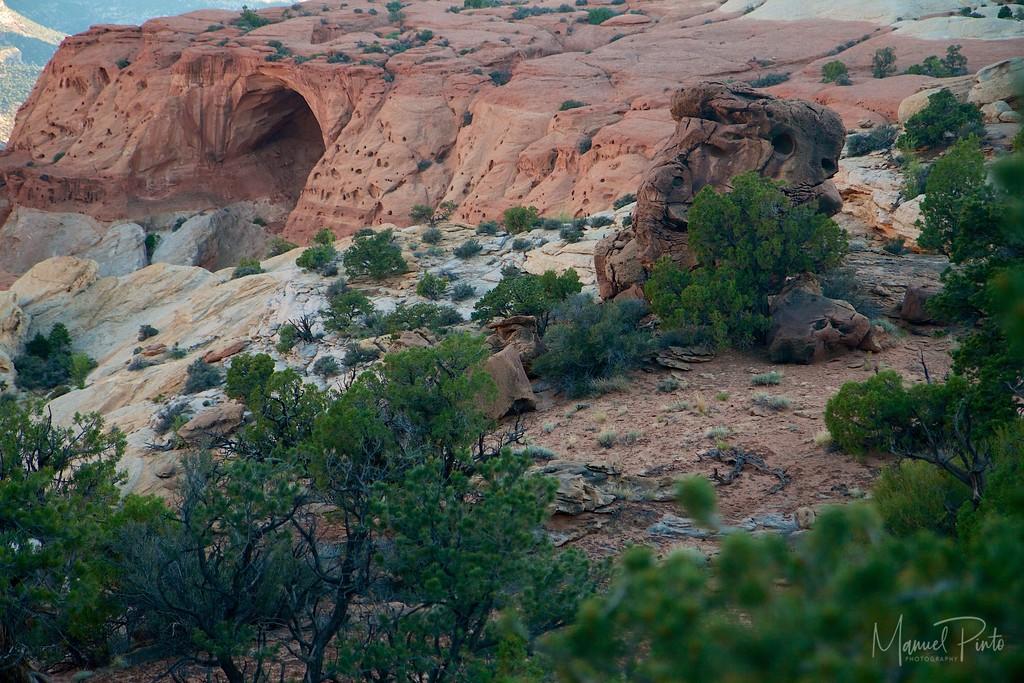 Cassidy Arch