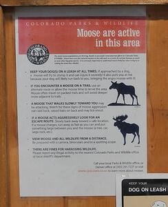 Moose Warning
