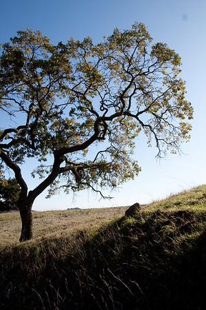 Harvey Bear Hike Nov. 28, 2009