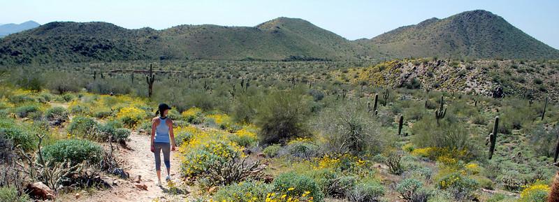 Sunrise Trail. McDowell Sonoran Preserve. 4/03/10