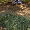 Myra relaxes at a lavender farm near Fredericksburg, TX