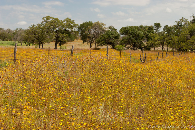 Texas Hill Country Field, somewhere between Fredericksburg and Austin