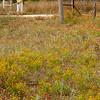 Myra and wildflowers, Willow City Road, near Fredericksburg, TX