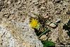 "Taken at Latitude/Longitude:31.354181/78.435729. 1.41 km South Mastarang Himachal Pradesh India <a href=""http://www.geonames.org/maps/google_31.354181_78.435729.html""> (Map link)</a>"