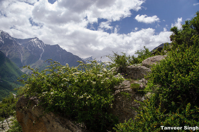 "Taken at Latitude/Longitude:31.353980/78.435060. 1.42 km South Mastarang Himachal Pradesh India <a href=""http://www.geonames.org/maps/google_31.353980_78.435060.html""> (Map link)</a>"