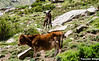 "Taken at Latitude/Longitude:31.354273/78.436545. 1.41 km South Mastarang Himachal Pradesh India <a href=""http://www.geonames.org/maps/google_31.354273_78.436545.html""> (Map link)</a>"