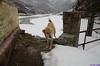 "Taken at Latitude/Longitude:31.015372/78.711942. 2.85 km South-West Harsil Uttarakhand India <a href=""http://www.geonames.org/maps/google_31.015372_78.711942.html""> (Map link)</a>"