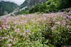 "Taken at Latitude/Longitude:30.719636/79.591342. 4.12 km North Lokpāl Uttarakhand India <a href=""http://www.geonames.org/maps/google_30.719636_79.591342.html""> (Map link)</a>"