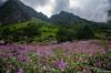 "Taken at Latitude/Longitude:30.719464/79.591417. 4.10 km North Lokpāl Uttarakhand India <a href=""http://www.geonames.org/maps/google_30.719464_79.591417.html""> (Map link)</a>"
