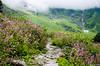 "Taken at Latitude/Longitude:30.718748/79.591366. 4.02 km North Lokpāl Uttarakhand India <a href=""http://www.geonames.org/maps/google_30.718748_79.591366.html""> (Map link)</a>"