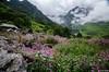 "Taken at Latitude/Longitude:30.719285/79.591464. 4.08 km North Lokpāl Uttarakhand India <a href=""http://www.geonames.org/maps/google_30.719285_79.591464.html""> (Map link)</a>"