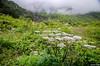 "Taken at Latitude/Longitude:30.722000/79.589327. 4.42 km North Lokpāl Uttarakhand India <a href=""http://www.geonames.org/maps/google_30.722000_79.589327.html""> (Map link)</a>"
