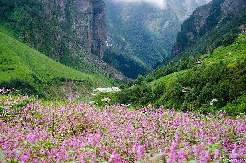 "Taken at Latitude/Longitude:30.722206/79.589732. 4.43 km North Lokpāl Uttarakhand India <a href=""http://www.geonames.org/maps/google_30.722206_79.589732.html""> (Map link)</a>"
