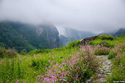Hemkunt Sahib and Valley of flowers 2012