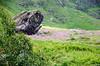 "Taken at Latitude/Longitude:30.720740/79.589572. 4.28 km North Lokpāl Uttarakhand India <a href=""http://www.geonames.org/maps/google_30.720740_79.589572.html""> (Map link)</a>"
