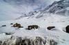 "Taken at Latitude/Longitude:32.322906/77.938313. 1.63 km West Morang Himachal Pradesh India <a href=""http://www.geonames.org/maps/google_32.322906_77.938313.html""> (Map link)</a>"